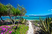 Road to the beach, Halkidiki, Greece, Europe