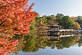 Autumn color around Ukimido Pavilion on the Sagiike Pond, Nara Park, Nara, Japan, Asia