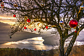 Tree above Lake Zug is decorated with Christmas baubles. Zugerberg. Switzerland