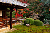 Zuishin-in temple moss garden in autumn, Kyoto, Japan, Asia