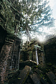 Tree growing in old abandoned ruins,†Siem†Reap, Siem Reap, Cambodia