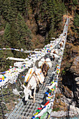 Horses crossing a Nepalese suspension bridge over a deep gorge on the way to Namche Bazar. The trek to Everest Base Camp (EBC) is possibly the most dramatic and picturesque in the Nepalese Himalaya. Not only will you stand face to face with Mount Everest, Sagarmatha in Nepali language, at 8,848 m (29,029 ft), but you will be following in the footsteps of great mountaineers like Edmund Hillary and Tenzing Norgay. The trek is scenic and offers ever-changing Himalayan scenery through forests, hills and quaint villages. A great sense of anticipation builds as you trek up the Khumbu Valley, passing