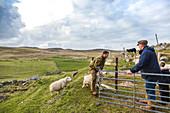 Shepherds herding sheep against vast hilly grassland, Scotland, UK