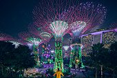 Illuminated supertrees of Gardens by Bay nature park at night, Singapore