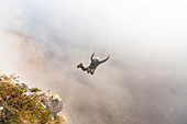 Base jumper mid air right after cliff jump during foggy weather, Brento, Venetien, Italy