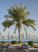 Palm trees at Corniche Promenade, West Bay, Doha, Qatar