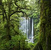 Korokoro Falls, Te Urewera Nationalpark, Hawke's Bay, Nordinsel, Neuseeland, Ozeanien