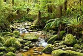 Regenwald, Oparara Basin, Kahurangi Nationalpark, West Coast, Südinsel, Neuseeland, Ozeanien