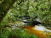 Moria Gate Arch, Oparara Basin, Kahurangi Nationalpark, West Coast, Südinsel, Neuseeland, Ozeanien