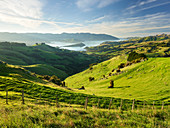 Banks Peninsula, Canterbury, Südinsel, Neuseeland, Ozeanien