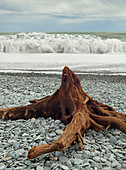 Driftwood at Gillespies Beach, Westland National Park, South Island, New Zealand, Oceania