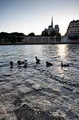 Gruppe von Enten am Ufer der Seine mit Blick auf die Aiguille der Kathedrale Notre-Dame, Paris, Frankreich