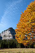 Karwendel mountains with beech in autumn colors in the foreground, Hinteriss, Tyrol, Austria