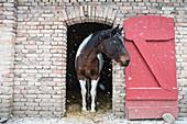 Schnee fällt über Pferd im Stalltor