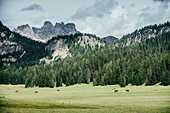 Horses in idyllic green valley, Drei Zinnen Nature Park, South Tyrol, Italy