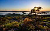 Bäume am Frenchman Bay bei Sonnenaufgang im Acadia National Park, USA