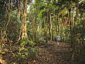 Woman walking in forest in Myall Lakes National Park, Australia