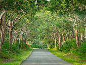 Treelined road in Myall Lakes National Park, Australia