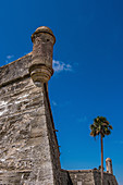 Palmen bei Castillo de San Marcos in St Augustine, USA
