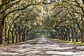 Von Bäumen gesäumte Straße mit spanischem Moos an der historischen Stätte Wormsloe in Savannah, USA