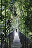 Footbridge in Costa Rican Forest,Arenal, Costa Rica