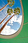Palmenbäume, Palm Springs, Kalifornien, USA