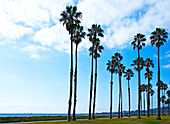 Palm Trees on Beach Walkway, Santa Barbara, California, USA