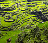 Aerial view of terraced paddy fields, Banaue, Infugao Province, Philippines