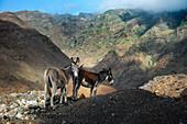 Cape Verde, Island Santo Antao, landscapes, mountains, donkeys\n\n\n\n\n\n\n\n\n\n\n\n\n\n\n\n\n\n\n\n\n\n\n\n\n\n\n\n\n\n\n\n\n\n\n\n\n\n\n\n\n\n\n\n\n\n\n\n\n\n\n\n\n\n\n\n\n\n\n\n\n\n\n\n\n\n\n\n\n\n\n\n\n\n\n\n\n\n\n\n\n\n\n\n\n\n\n\n\n\n\n\n\n