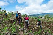 Cape Verde, Island Santiago, rain season , mountains, farmers working the fields