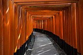Fushimi Inari in Kyoto, Japan
