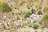 A shepherd in the Toachi River Canyon in Ecuador
