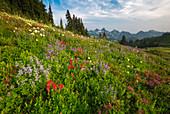 Wildblumen und Berge, Tatoosh Range, Mount Rainier National Park, Washington
