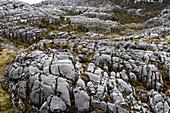 Kalksteinfelsformationen, Schnee-Berge, Papua, Indonesien