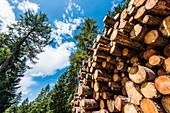 Riesiger Stapel mit Holzstämmen aus Nadelholz, Radein, Südtirol, Alto Adige, Italien
