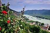 View over Spitz on the Danube in the Wachau, Lower Austria, Austria