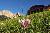in Colfosco with Chiampac, Alta Badia, Dolomites, South Tyrol, Italy