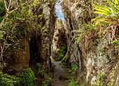Felsenlabyrinth, Asilo de la Paz, Hochländer von Floreana (Charles) Island, Galapagos, UNESCO-Welterbestätte, Ecuador, Südamerika