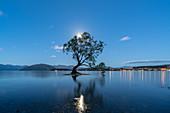 Ein einziger Baum im See Wanaka in Mondschein, Bezirk Wanaka, Queenstown Lakes, Otago-Region, Südinsel, Neuseeland, Pazifik