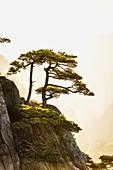 Bäume wachsen auf felsigen Bergen, Huangshan, Anhui, China