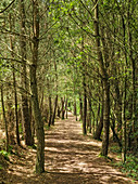 Forest Path,Brocliande forest, Paimpont, Morbihan, Brittany, France, Europe
