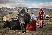 Kirgisin melkt Yak, Pamir, Afghanistan, Asien