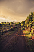 Deserted road on Pico, Azores, Portugal, Atlantic, Atlantic Ocean, Europe,