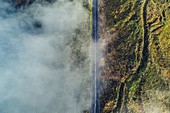 Straße im Nebel auf den Azoren, Sao Miguel, Azoren, Atlantischer Ozean, Portugal, Europa