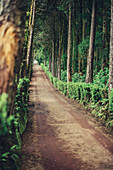Path at the Lago do Canerio on the island of San Miguel, Azores, Europe, Atlantic