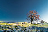 Lone tree on a pasture in the winter mood in the blue country. Uffing, Staffelsee, Bavaria, Germany