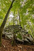 Baum auf einem Felsen, Triglav Nationalpark, Slowenien