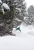 Skifahrer im Tiefschnee am Waldrand, Hochfügen, Tirol, Zillertal