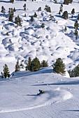 Skifahrer fährt im Tiefschnee Hang hinunter, Hochzillertal, Tirol, Österreich
