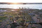 Bassin d'Arcachon, im Vordergrung Austernbänke, Gujan-Mestras, Arcachon, Aquitanien, Gironde, Frankreich, Europa